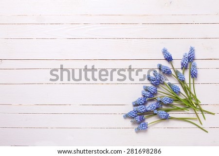 Background with fresh  blue muscaries flowers on white painted wooden planks. Selective focus. Place for text. - stock photo
