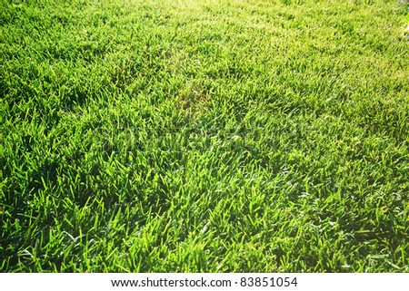 Background with fresh green grass - stock photo