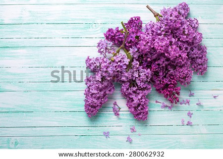 Background  with fresh lilac flowers  on turquoise painted wooden planks. Selective focus. Place for text. - stock photo