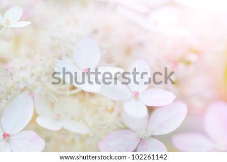 background with gently rose flowers - stock photo