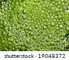 Background with green bubbles - stock photo