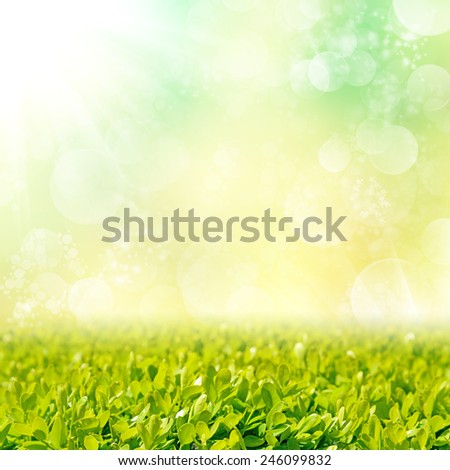 Background with green grass field and bokeh light