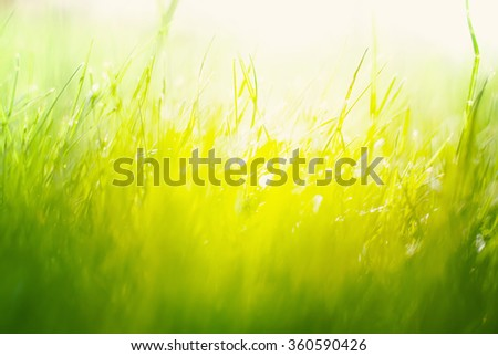 Background with Green Summer Landscape. Grass in Yellow Sunlight  St Patrick Day  - stock photo