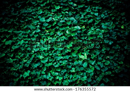 background with ivy leafs - stock photo