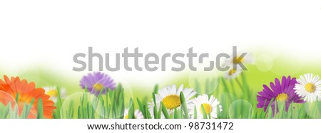 Background with meadow and daisies