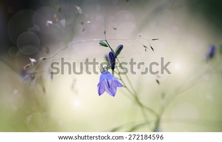 Background with of wildflowers - blue Harebells (Campanulas). - stock photo