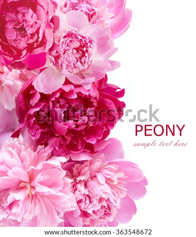 Background with peonies flowers isolated on white with sample text - stock photo