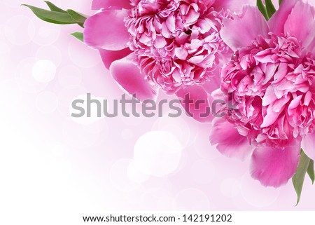 Background with pink peonies and space for text