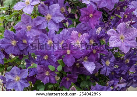 background with purple flowers - stock photo