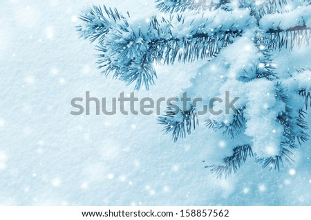 Background with snow-covered pine branch - stock photo