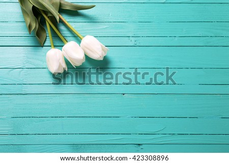 Background with three white tulips on turquoise wooden planks. Flat lay. Selective focus. Place for text. - stock photo