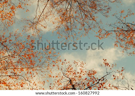 background with tree branches against the sky - stock photo
