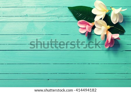 Background with white and pink tropical plumeria flowers on turquoise wooden background. Selective focus. Place for text.  - stock photo