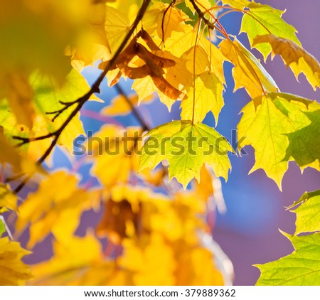 background with yellow and orange autumn leaves, partially blurred background