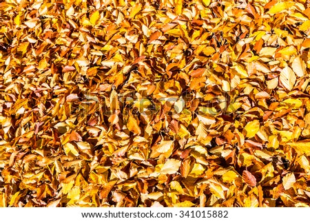 background yellow leaves at sunny day - stock photo