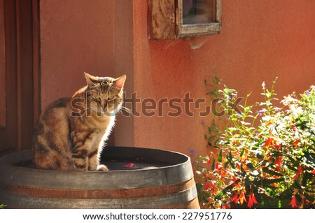 Backlit cat, sitting on a barrel in the afternoon sun - stock photo