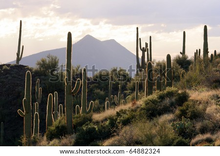 Backlit Desert Scene - stock photo