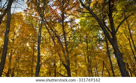 Backlit forest in deep autumn colors.