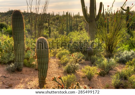 Backlit Sonoran Desert at sunset. - stock photo