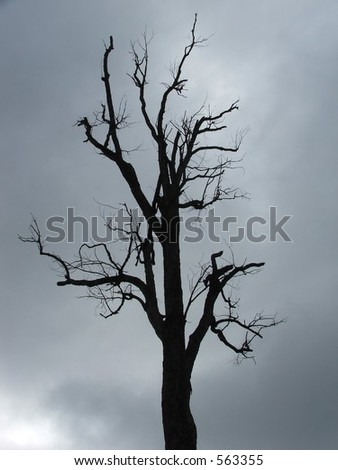Backlit tree, stormy clouds behind - stock photo