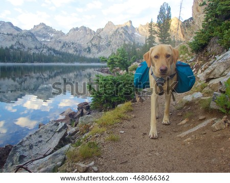 Backpacking dog, Idaho