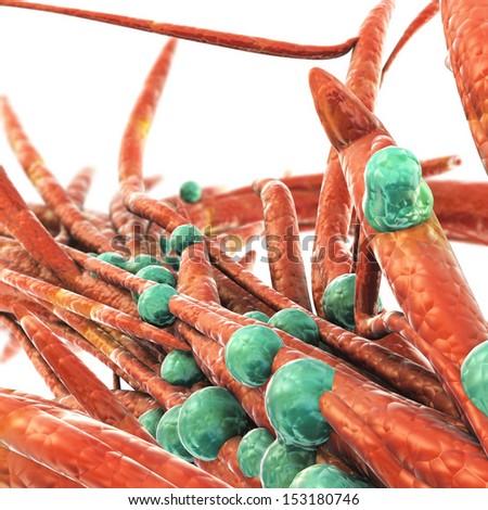 Bacteria Colony - stock photo