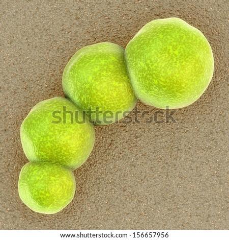 Bacteria - Staphylococcus aureus bacteri - stock photo