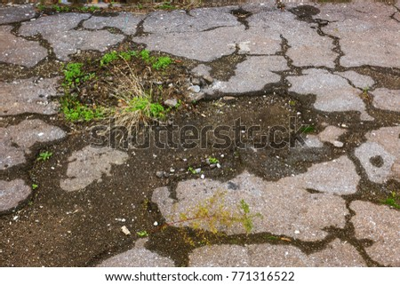 Bad road. Bad asphalt. Web of beautiful bright deep cracks in the asphalt. Road in cracks was overgrown with moss. Road repair. Creative background of abandonment, ruin, debris, crisis. Ruined Asphalt
