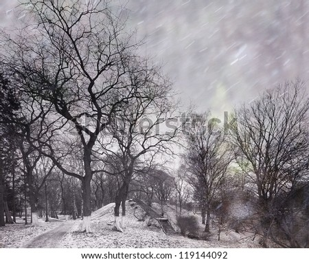 Bad weather, snow and wind in the city park, trees without leaves, gray tones, autumnal stress