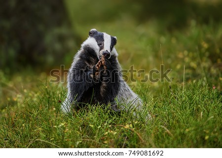 Mammals Stock Images Royalty Free Images Amp Vectors