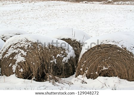 Bails of hay covered with a fresh blanket of snow - stock photo
