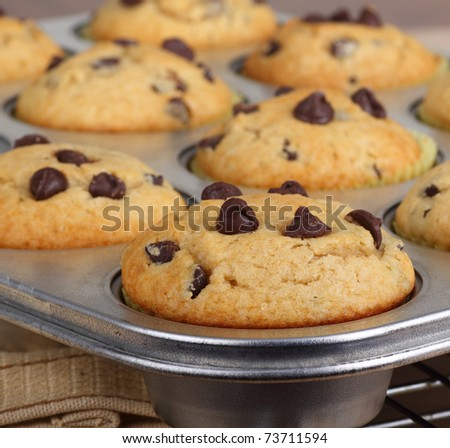 Baked chocolate chip muffins in a muffin pan - stock photo