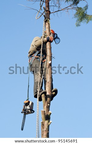 Balancing on tree trunk working is felling - stock photo