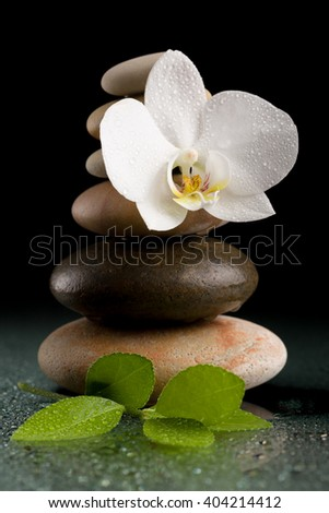 balancing pebble stones and white flower orchid with water drop, ZEN stone, on black background, spa tranquil scene concept with reflection