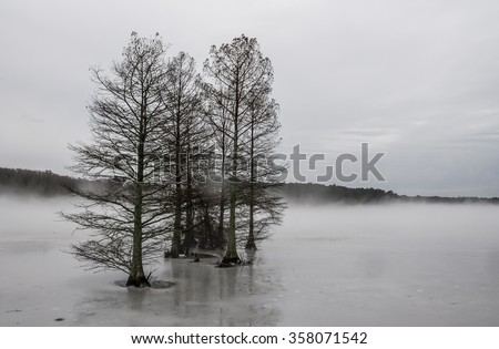 Bald Cypress trees in frozen lake in fog, Stumpy Lake, Virginia Beach, Virginia. - stock photo