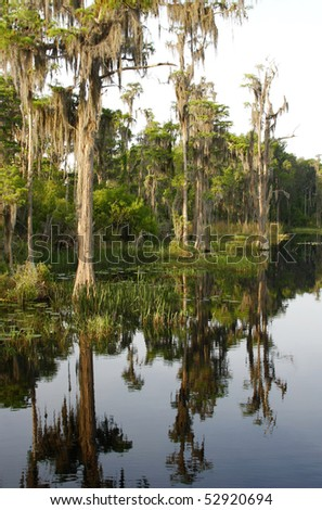 Bald Cypress Trees Reflected in Lake - stock photo