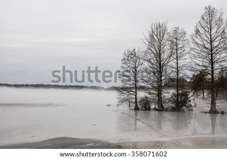 Bald Cypress tress in frozen in lake in winter at Stumpy Lake in Virginia Beach, Virginia.  - stock photo