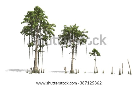 Cypress Stock Images, Royalty-Free Images & Vectors ...