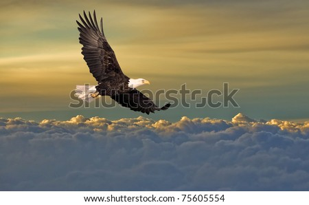 Bald eagle flying above the clouds - stock photo