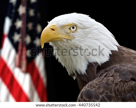 Bald Eagle (Haliaeetus leucocephalus washingtoniensis) portrait in front of the flag of the United States of America