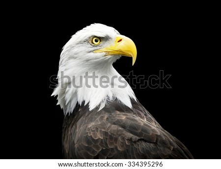 Bald eagle on black