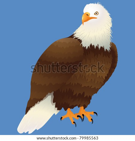 Bald eagle on isolated on sky Blue