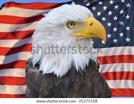 bald eagle superimposed on united states of america flag, stars and stripes, usa, proud american symbol - stock photo