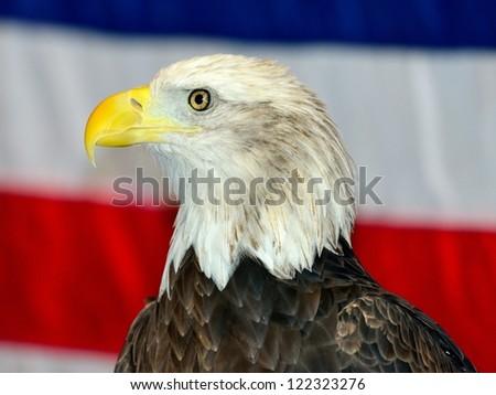Bald Eagle with USA flag as backdrop - stock photo