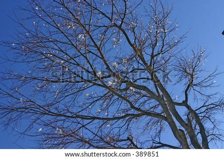 Bald Tree - stock photo