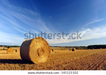 Bale of hay on the field after harvest