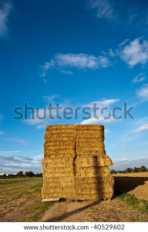 bale of straw on the field in intensive colors