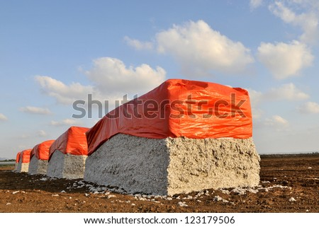 Bales of cotton against cotton in Israel - stock photo