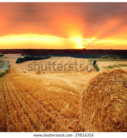 bales of hay or straw. field at harvest with crop cut and pressed in sunset - stock photo