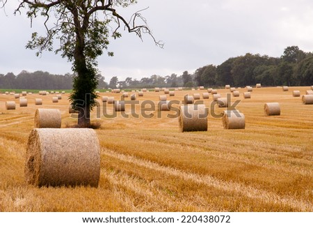 bales of straw and a tree on a field - stock photo